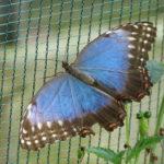 fotka razstava metuljev_img_4394
