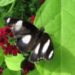 fotka razstava metuljev_img_5380
